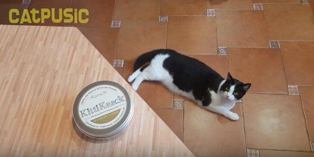 缶の中身が欲しい猫