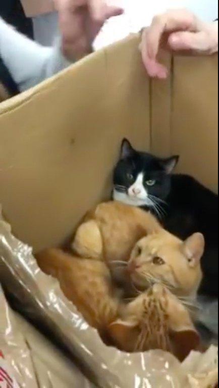 4箱目の中に入っていた猫