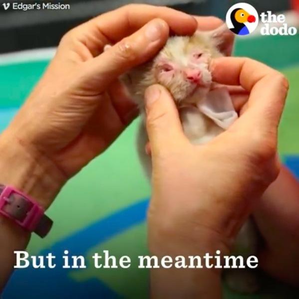 子猫の治療開始