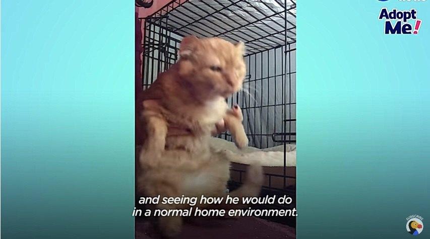 人になれる訓練をする猫