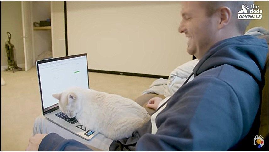 お父さんのパソコンを邪魔する子猫