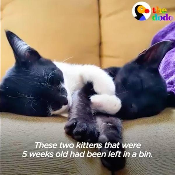 やって来た子猫二匹