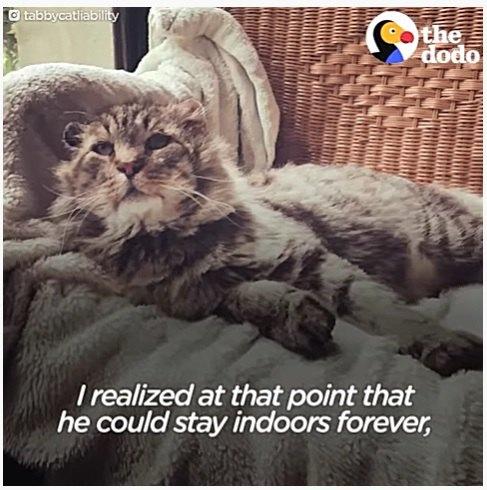 ソファーでくつろぐ老猫