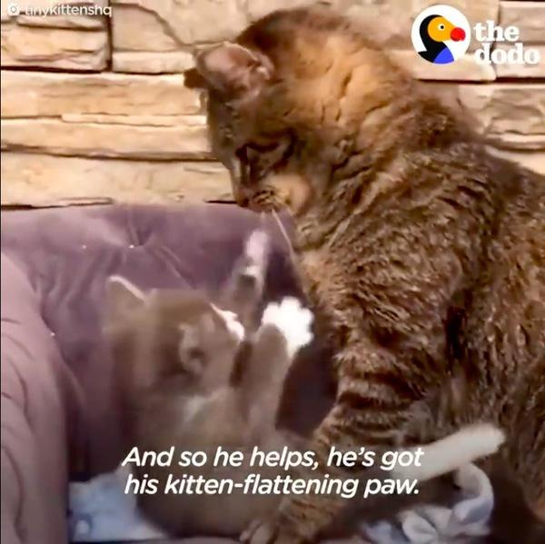 子猫を教育するメイソン