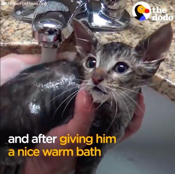 体を洗う子猫