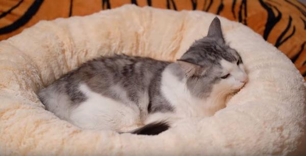 ベッドで寛ぐ猫