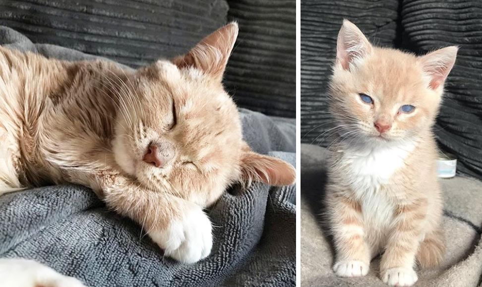 副甲状腺機能低下症の子猫