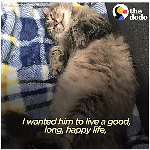 ヘソ天で眠る老猫