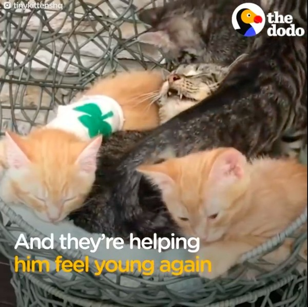 子猫とお昼寝するメイソン