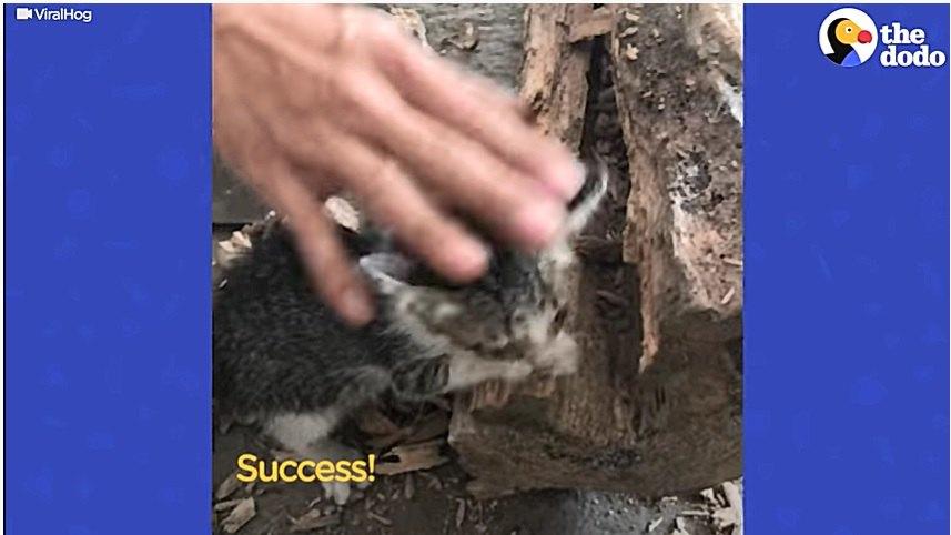 丸太から救助された子猫