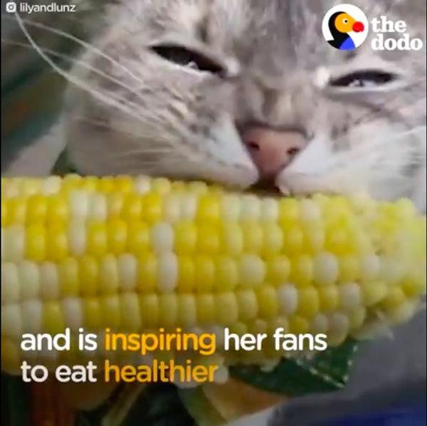 コーン食べる猫のリリー