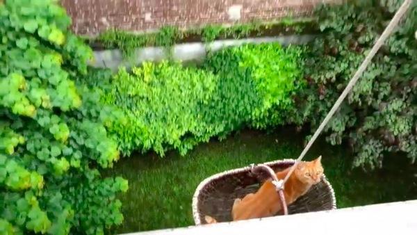 上へ引き上げられる猫