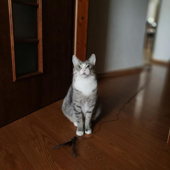 休憩しませんか?と誘う猫
