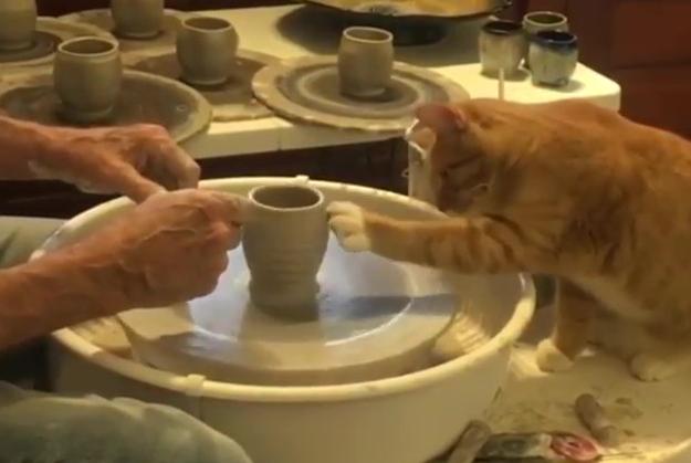 ろくろ猫師匠
