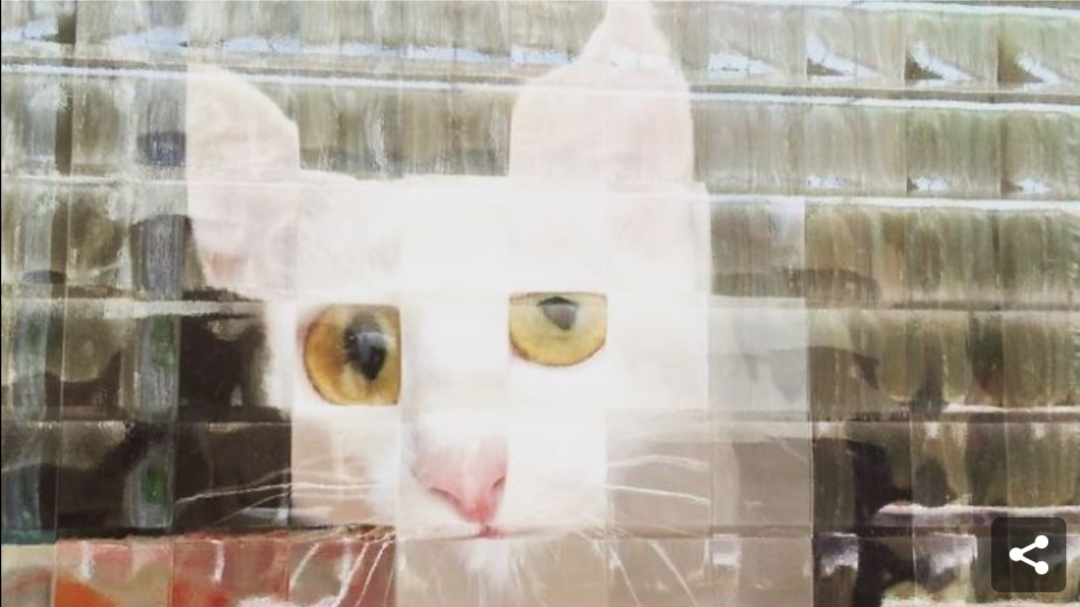 凹凸ガラスで目が拡大した猫