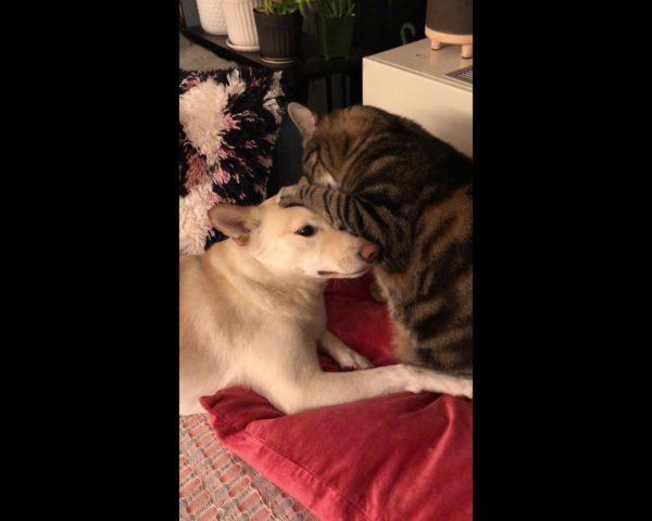 犬を舐める猫