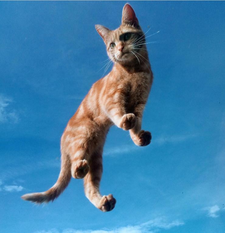 空に浮かぶ猫