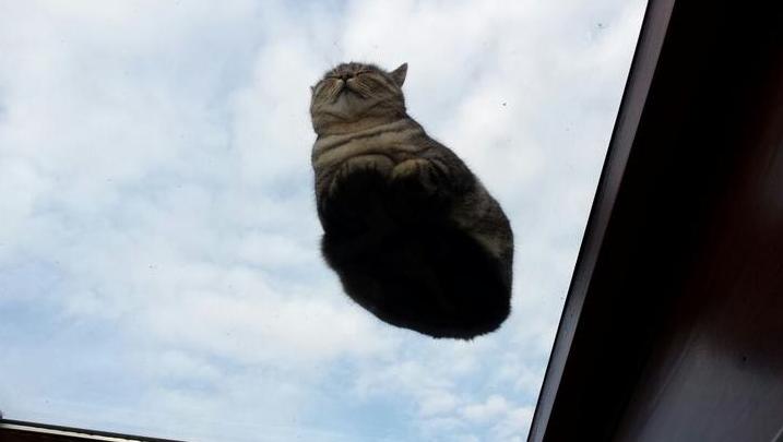 天窓のガラスに座る猫