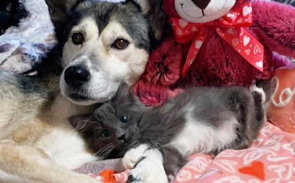 犬と足がねじれた子猫