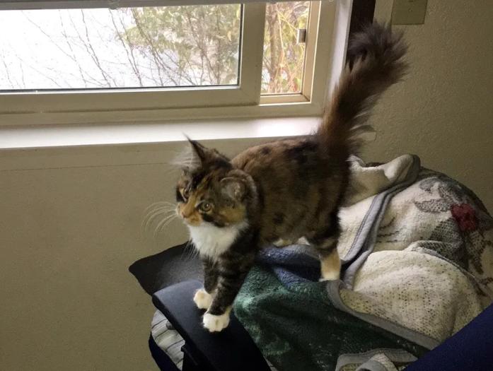 窓からやってきた子猫