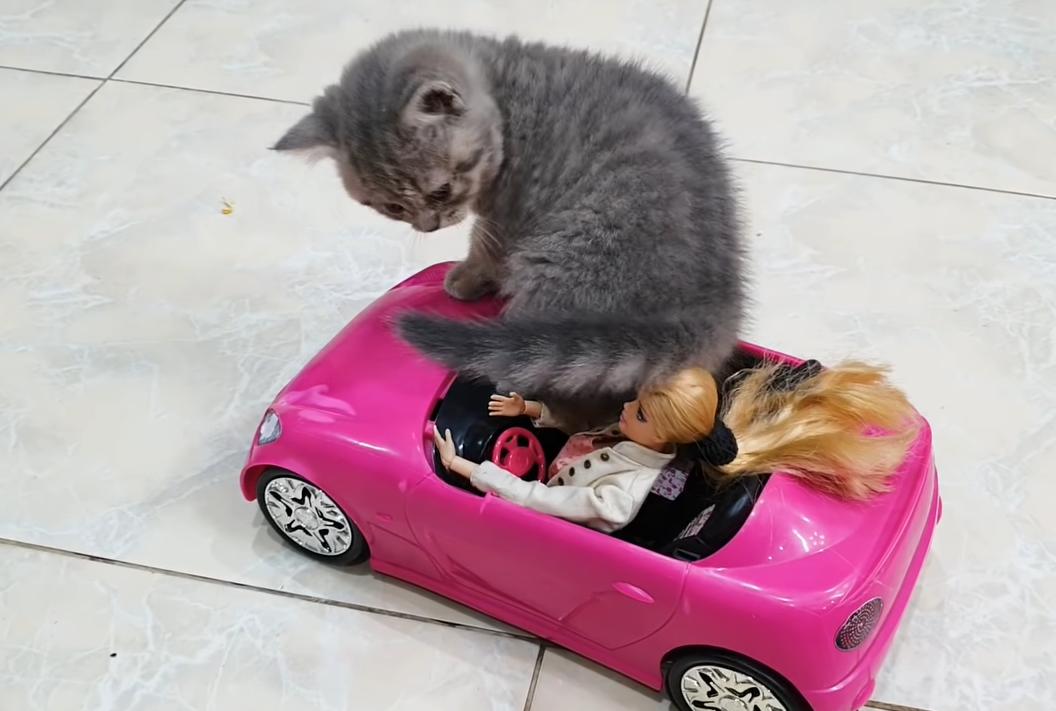 バービー人形を押しつぶす子猫