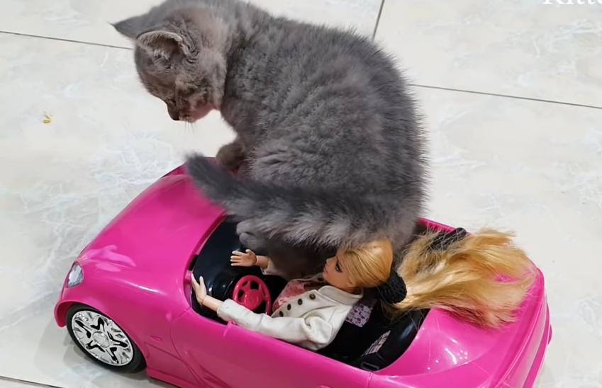 ピンクの車のおもちゃに乗る子猫
