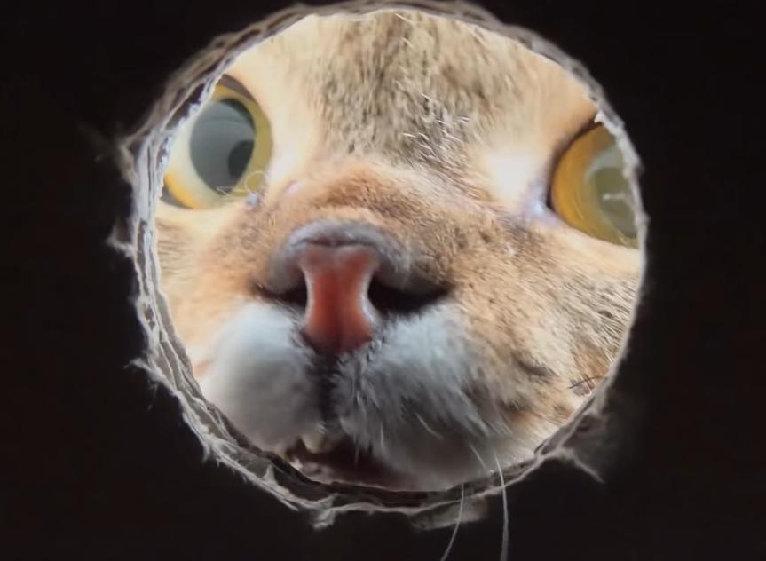猫の顔の中心