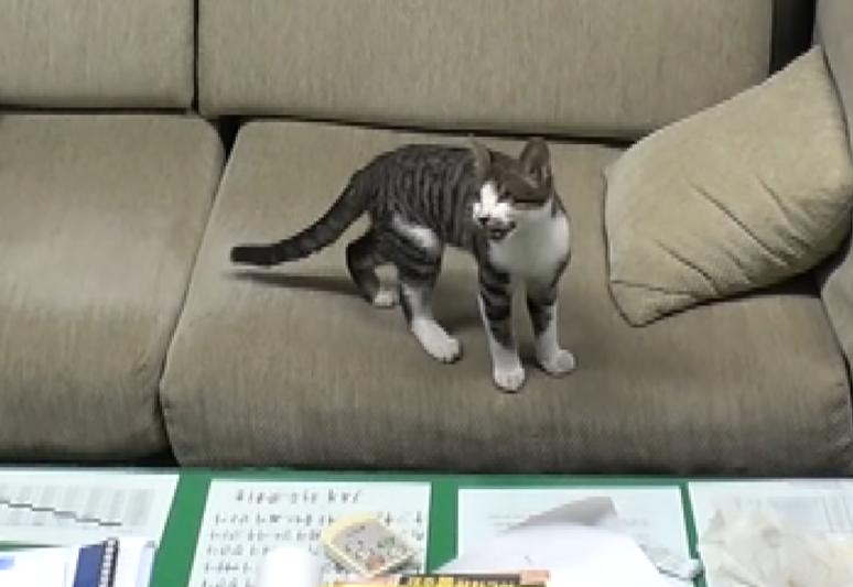 昼寝から起きてお父さんを探す子猫