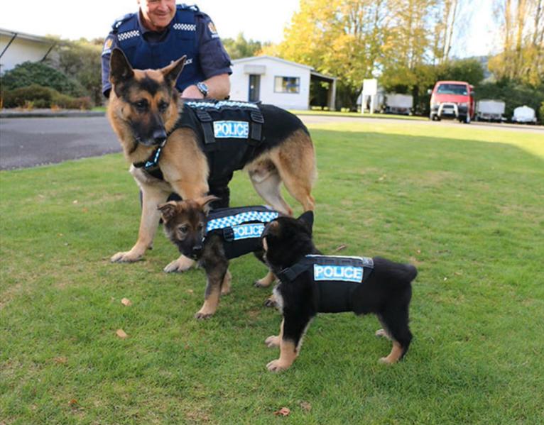 練習に初参加した警察犬の子犬