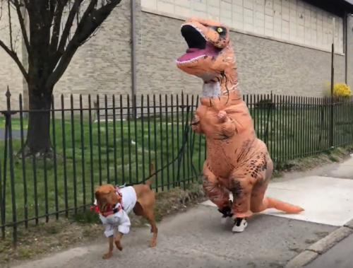 ティラノザウルスと犬