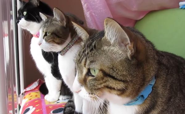 窓の外を見る3匹の猫