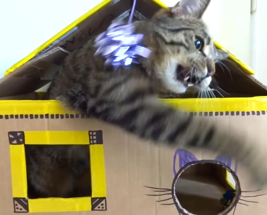 最上階から猫パンチする猫