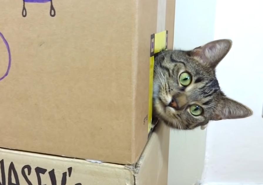 横の穴から顔を出している猫