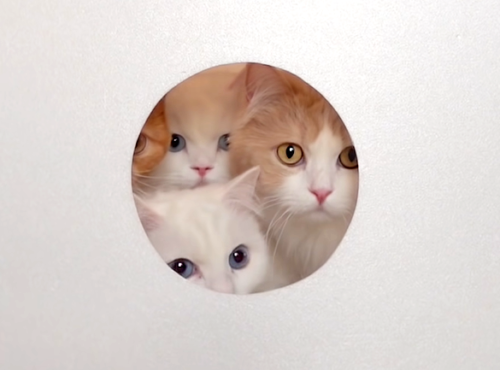 小さな穴から覗く4匹の猫