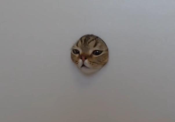 穴に顔を突っ込む猫