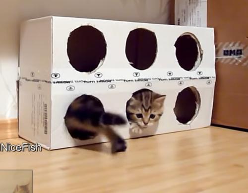 手作りハウスで遊ぶ子猫