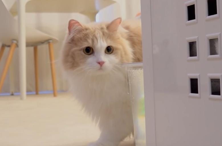 角から覗く猫