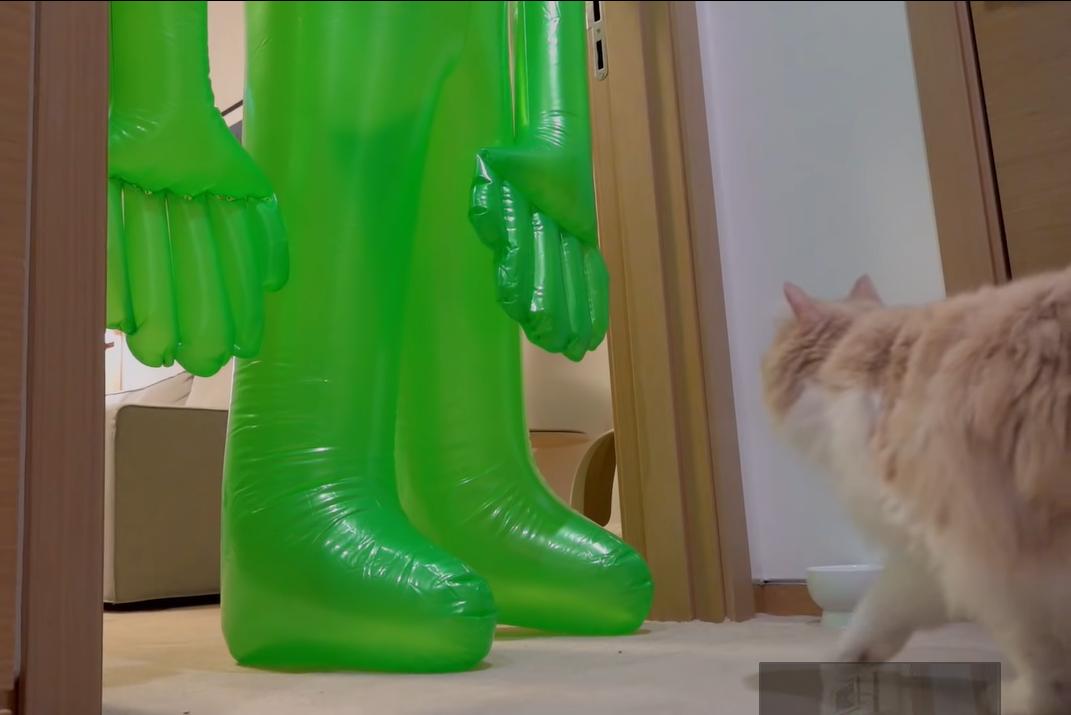 エイリアンを見上げる猫