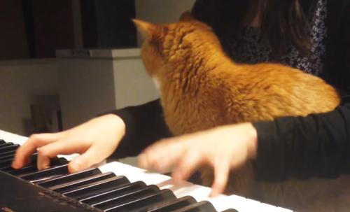 ピアノの演奏を邪魔する猫