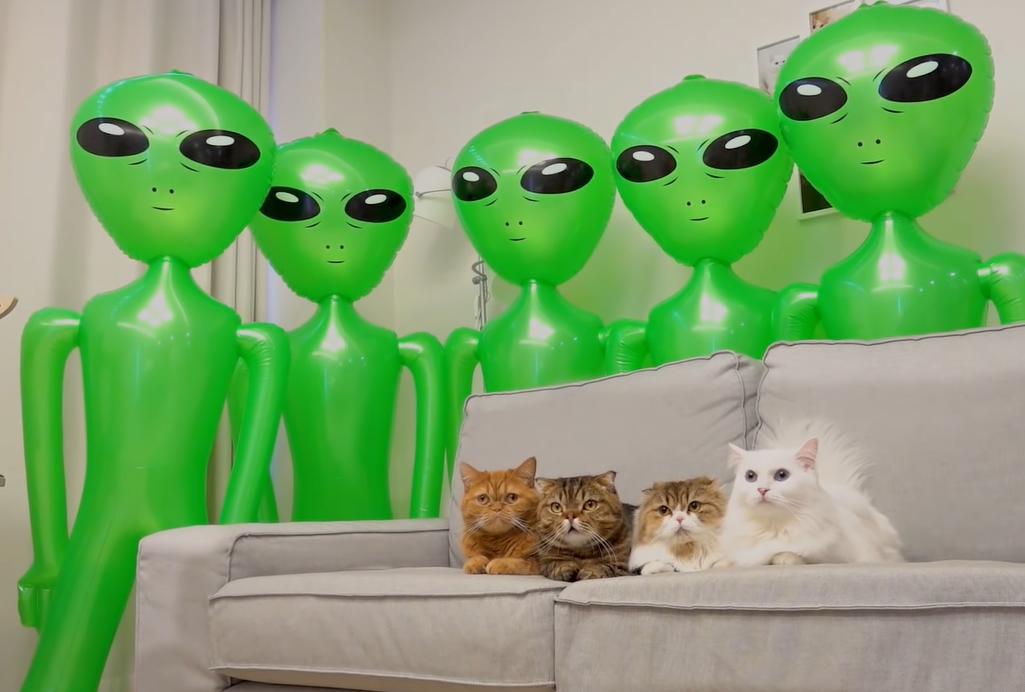 猫と宇宙人
