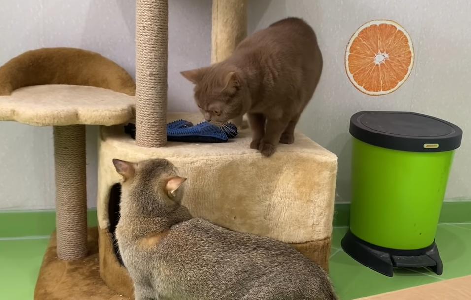 そわそわする猫2匹