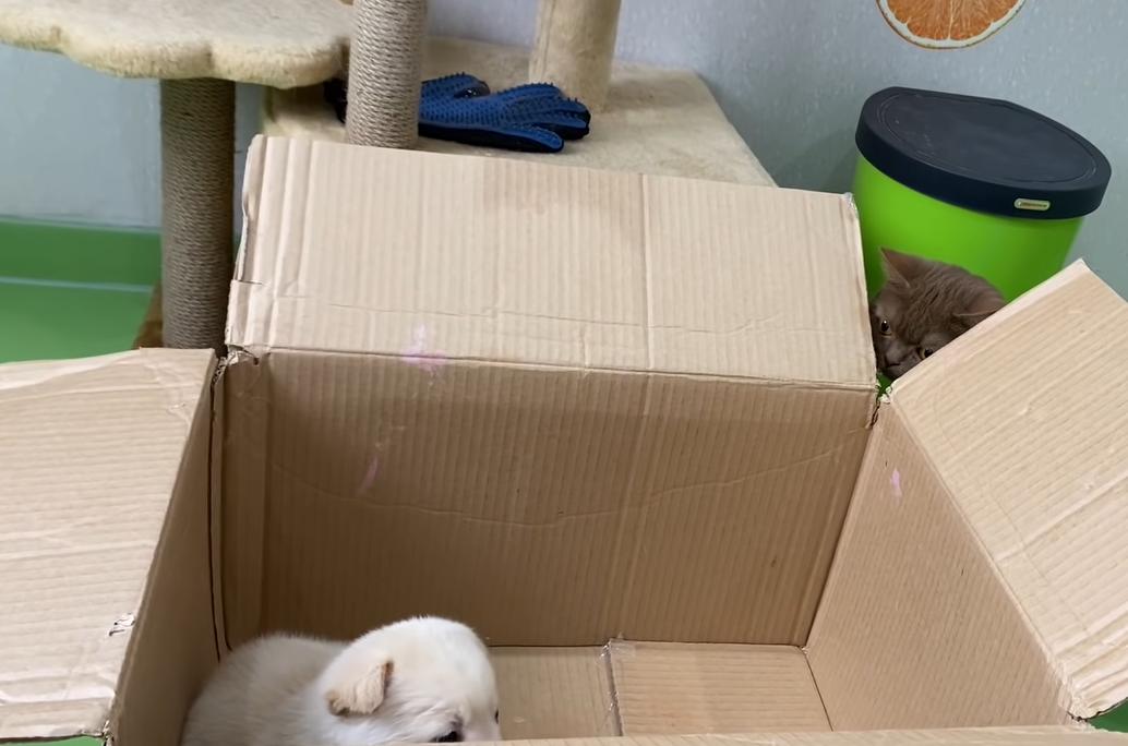 箱の中に居た子犬