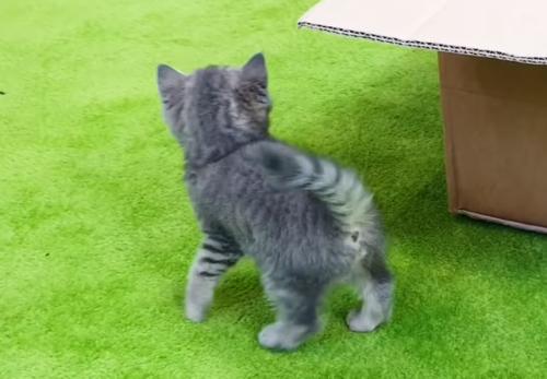 声の主を探す子猫