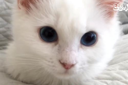 天使のように可愛い子猫