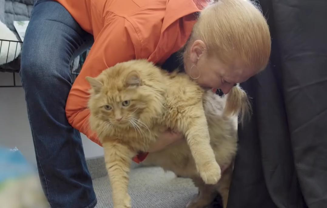 太っちょ猫を抱っこする女性