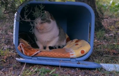 ホームレスの猫