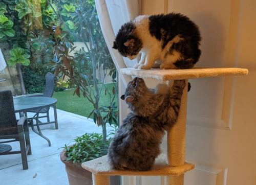 再開を果たした兄妹猫