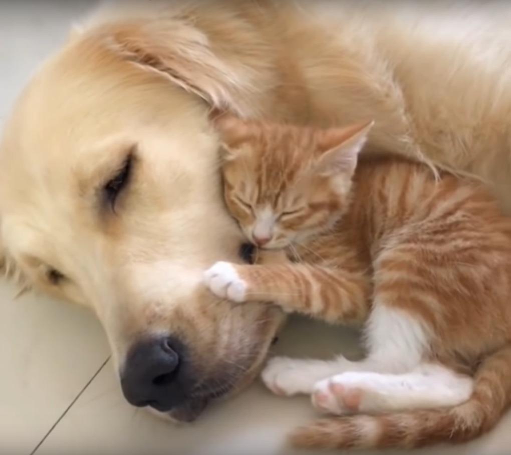 一緒に寝る子猫と犬