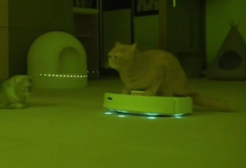 ルンバに乗った猫星人
