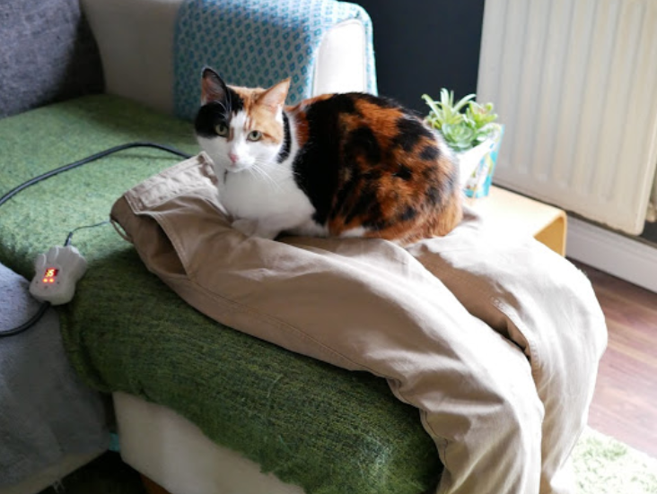 猫用の膝に座る猫